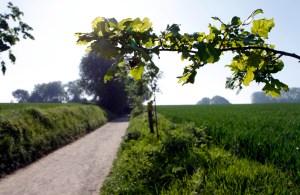 Het prachtige landschap van Zuid-Limburg.