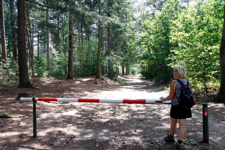 De route loopt het bos in.