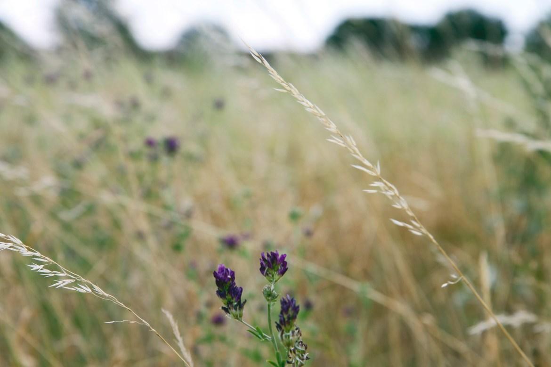 Veel kleurige bloemetjes in het veld.