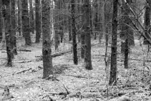 Het Strubbenbos, nog een laatste stukje bos tijdens deze etappe.