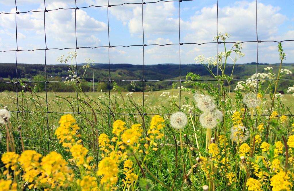 Uitzichten in Wallonie