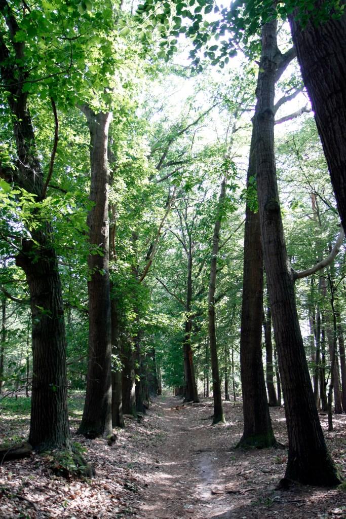 Prachtige bossen bij de Eelerberg