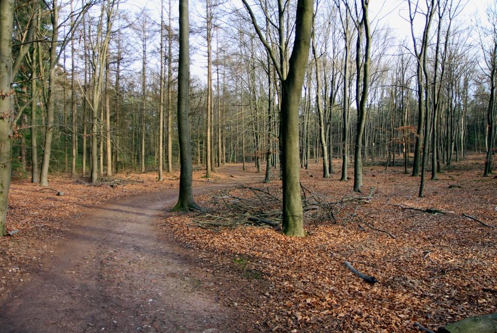 Het bos van de Sallandse Heuvelrug.