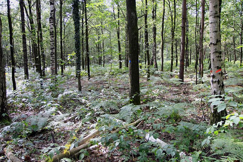 Door het bos