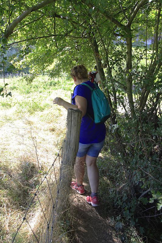 Een smal paadjes tussen een hek en de struiken