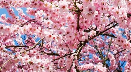The Symbolism of My Seven Favorite Springtime Flowers