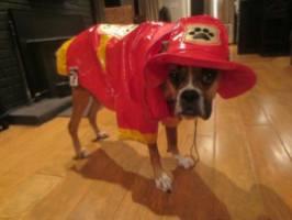 Fireman Frank