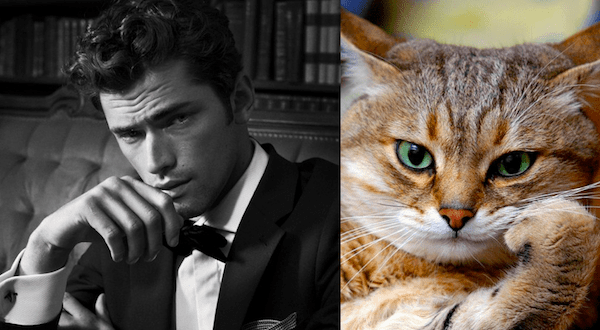✔ Perbandingan umur kucing dengan manusia