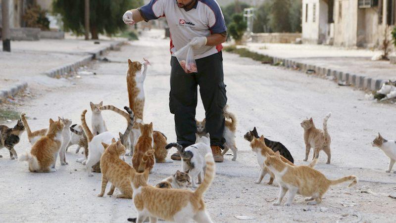 ✔ Panduan Membela Kucing