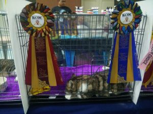KB KELANTAN FUN CAT SHOW 2.0 (6/5/2017) – part 2