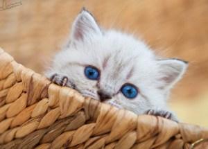 Keistimewaan Kucing