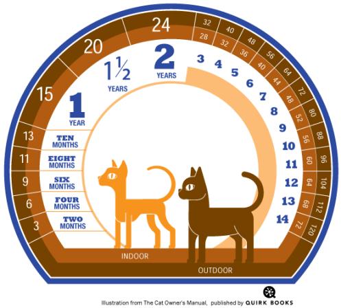 Perbandingan umur kucing dengan manusia