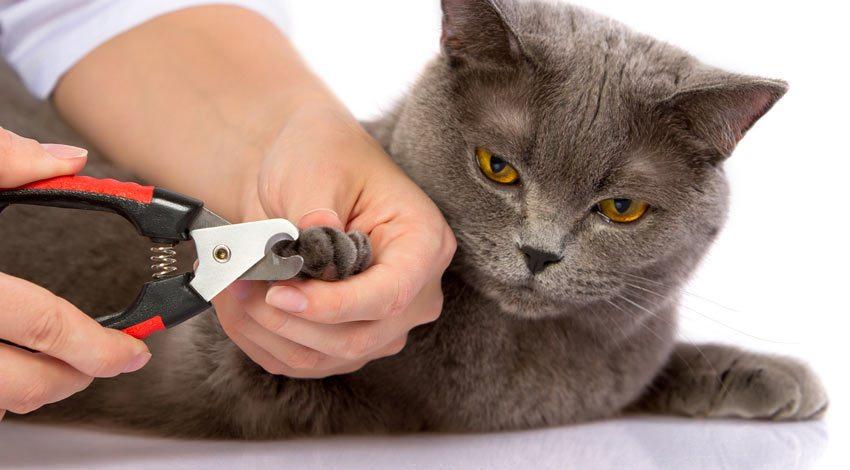 ✔ Cara Memotong Kuku Kucing