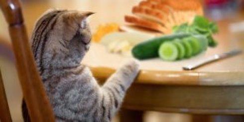 Makanan Yang Tidak Baik Untuk Kucing