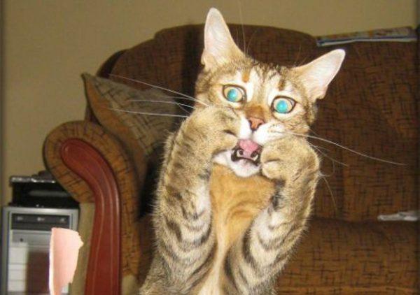 Dosa daripada Memelihara Kucing