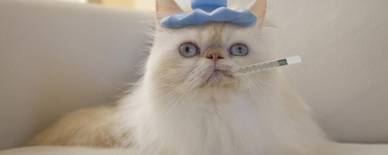 ✔ Cara Merawat Kucing Demam 2