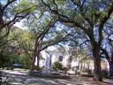 Canopy of Trees in Savannah, Georgia