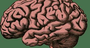 研究發現,隨年齡增長,男性腦內灰質的退化速度比女性快。(網上圖片)