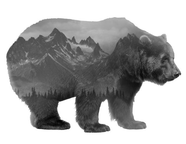 WILDlife - Forest Bear
