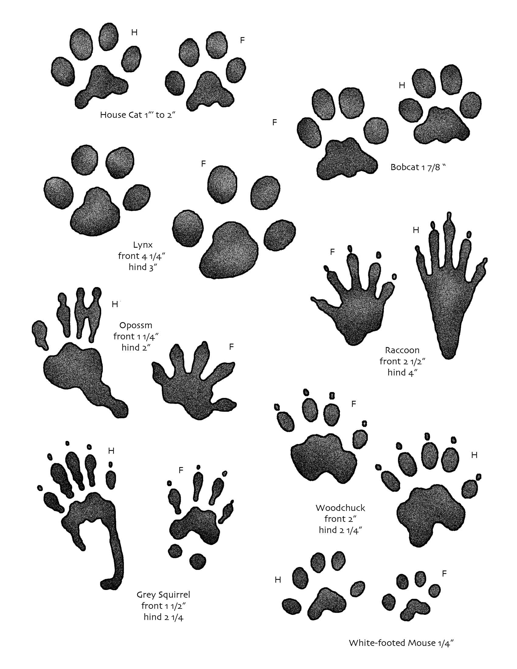 What Kind Of Wild Animals Live Near You Go Animal Track