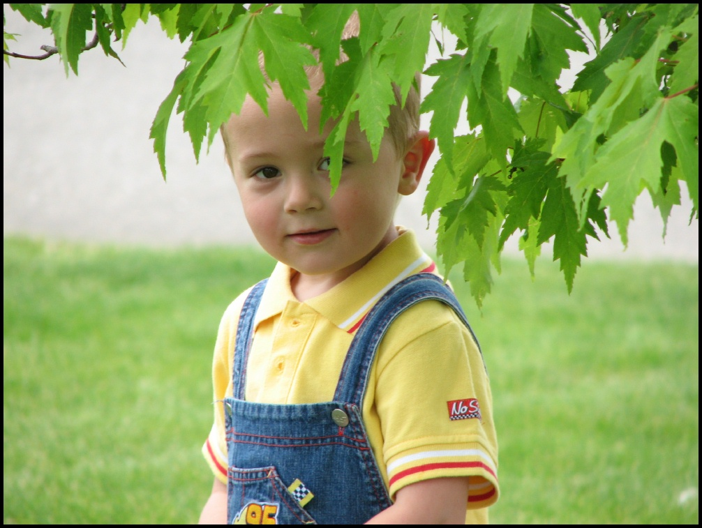 Brady peekaboo leaves