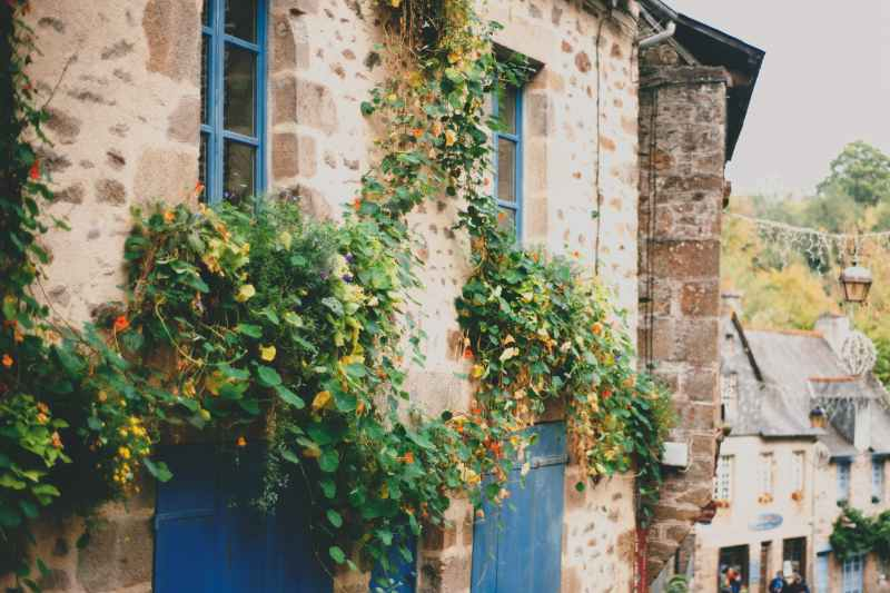 rural stone building decorated with lush climbing plants