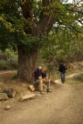 Bill resting under the oak tree near Molinaseca Spain