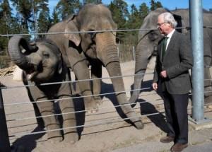 La ecología es algo que Carlos Gustavo de Suecia tiene muy en cuenta. En la foto con los elefantes que le regaló el rey de Tailandia y que tiene en Kolmården. (Foto: Kungahuset.se)