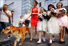 Tener un perro-tigre o bien un perro-panda se ha convertido en la última moda en China. (Foto China Foto Press) - PULSAR PARA AMPLIAR -