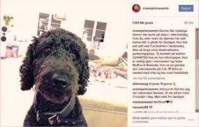 La princesa Mette-Marit de Noruega pidió ayuda en Instagram para buscar a Muffins Kråkebolle, una de las perras de la familia que había desaparecido mientras esquiaban. (Foto: Princesa Mette-Marit / Captura Instagram)