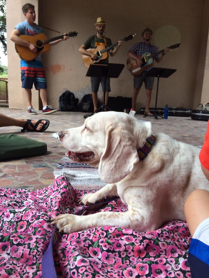 Dog's eye view of the Dylan Singalong