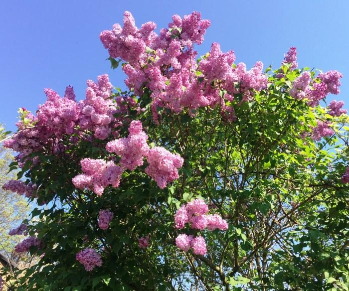 Photo 21-04-19 11 24 24