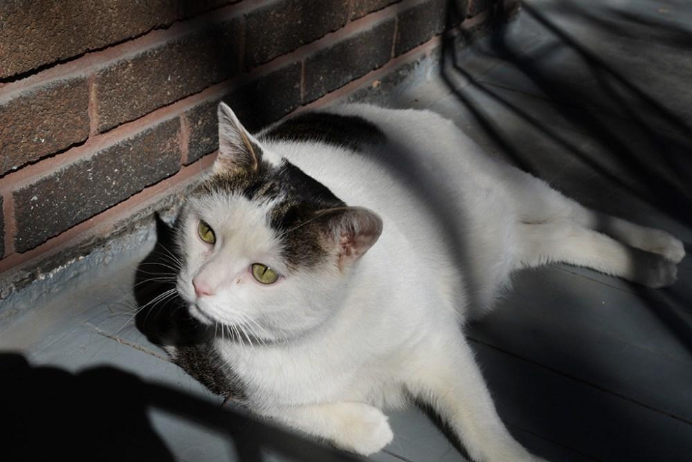 Mon chat...My cat...