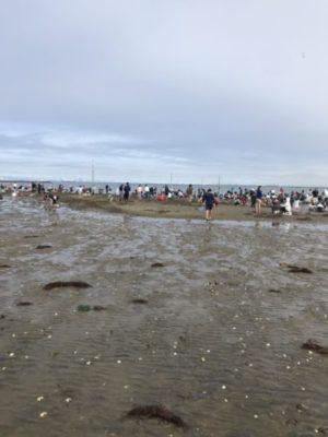 富津の潮干狩り場