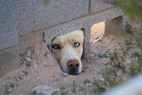 dog injustice