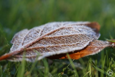 Frozen leaf, Assigny, Normandie, France