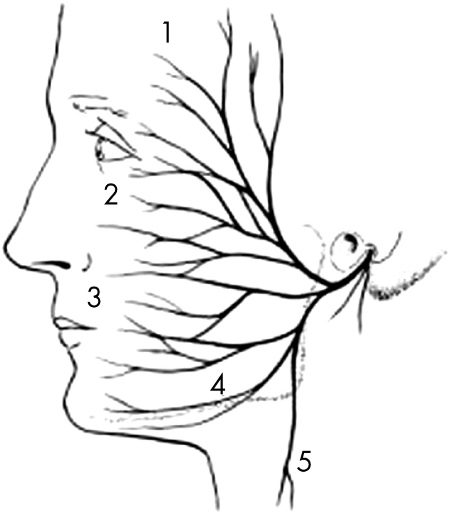 Clinical Test Discloses Marginalis Mandibulae Branch