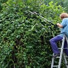 Création et taille de haies   Jo votre jardinier paysagiste à Chevillon, Charny Orée de Puisaye, Yonne (89)   www.jo-votre-jardinier-paysagiste.fr