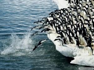 liderazgo animal