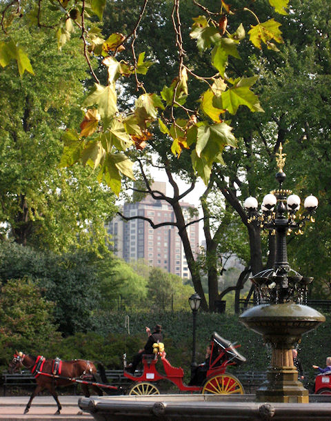 Photo of carriages around the fountain in Central Park taken by Joana Miranda