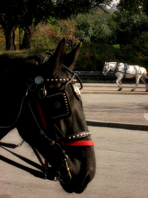 Photo of brown and white horses in Central Park taken by Joana Miranda