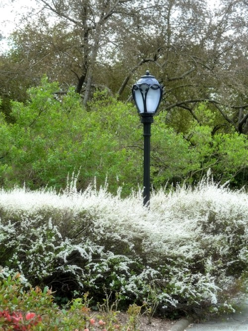 Lamp post and flowering bushes
