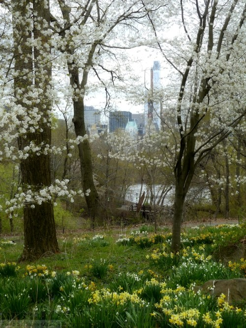 Looking south in Central Park
