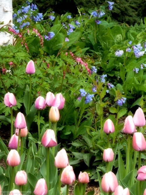 tulips and wildflowers