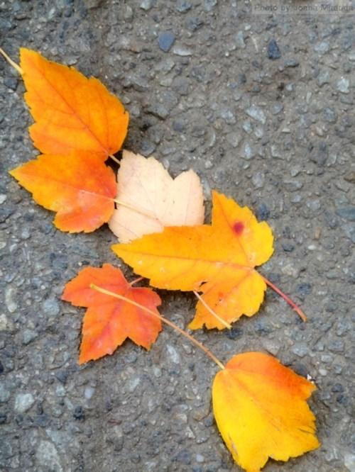 leaves on grey stone walk