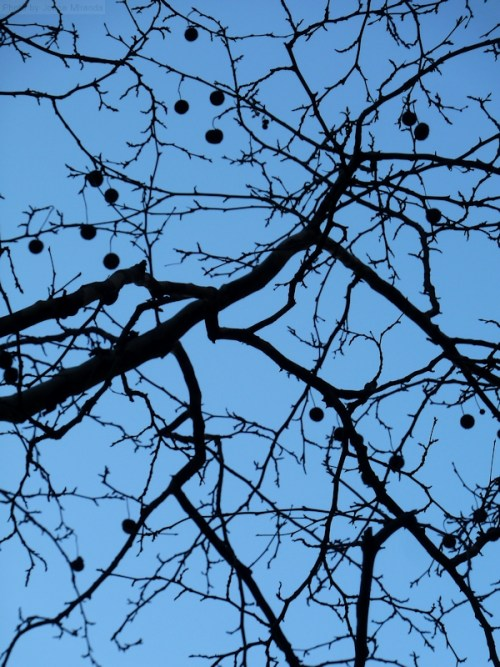 black branches against a blue sky