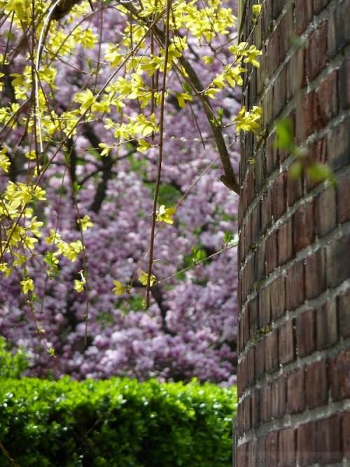 Conservatory Garden in springtime