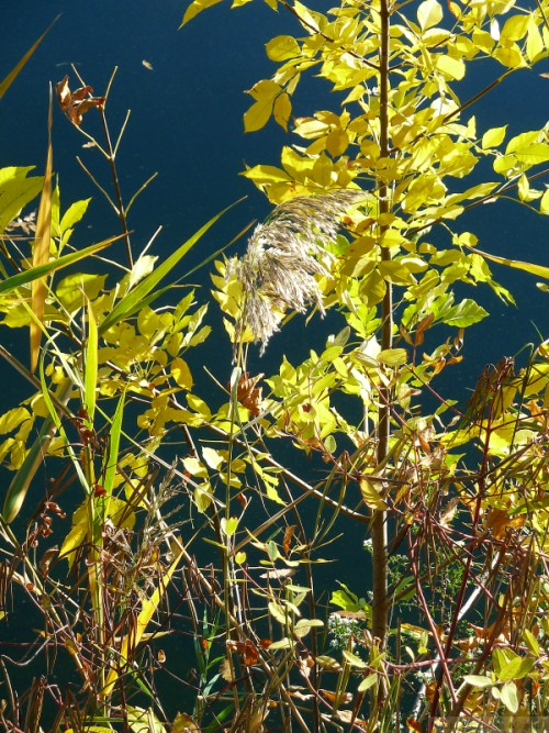 sunlit weeds along the reservoir