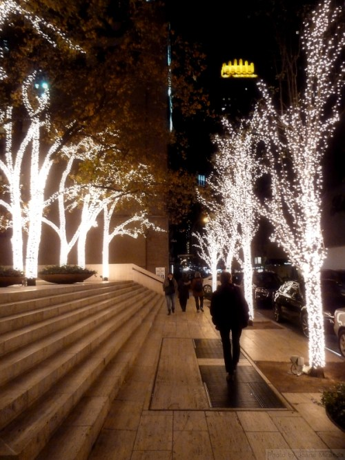 Trees lit up for the holidays in NYC