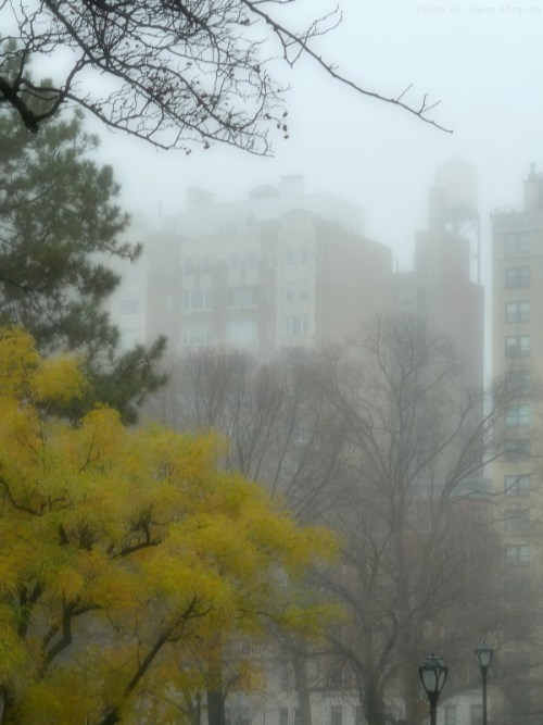Yellow tree in Central Park in the fog